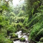 nyungwe-forest
